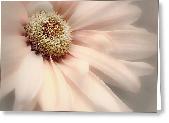 Greeting Card featuring the photograph Arabesque In Peach Glow by Darlene Kwiatkowski