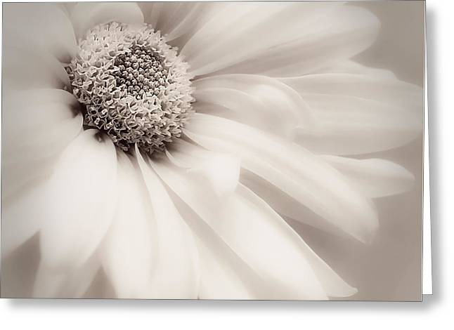 Greeting Card featuring the photograph Arabesque In Soft Charcoal by Darlene Kwiatkowski