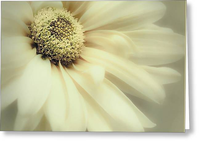 Greeting Card featuring the photograph Arabesque In Soft Moss by Darlene Kwiatkowski