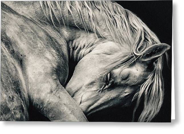 Arabian Beauty White Horse Portrait Greeting Card
