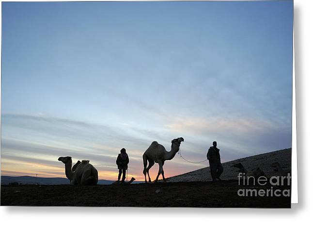 Arabian Camel At Sunset Greeting Card by PhotoStock-Israel