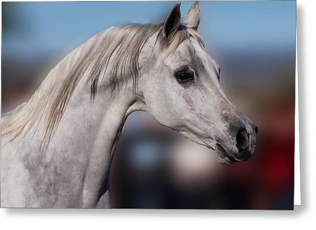 Arabian  Greeting Card by Dennis Eckel