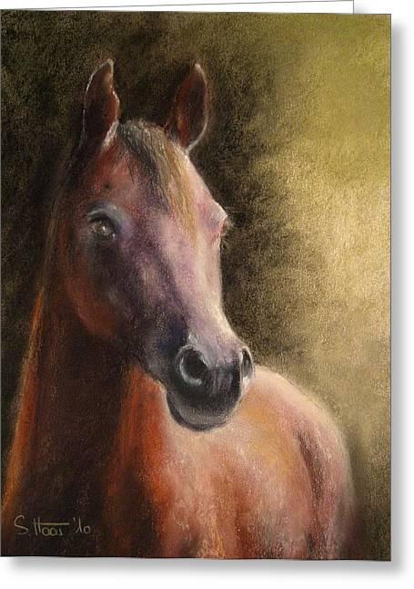 Pony Pastels Greeting Cards - Arabian Horse Greeting Card by Sabina Haas