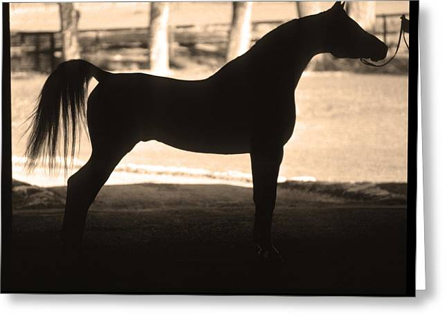 Arabian Horse Silhouette Sepia Print Greeting Card by James BO  Insogna