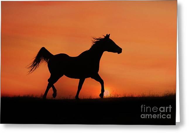 Arabian Horse Sunrise Greeting Card by Stephanie Laird