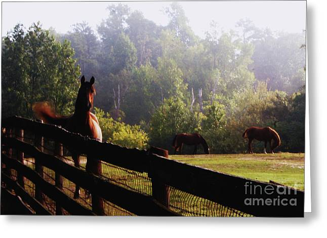Greeting Card featuring the painting Arabian Horses In Field by Debra Crank