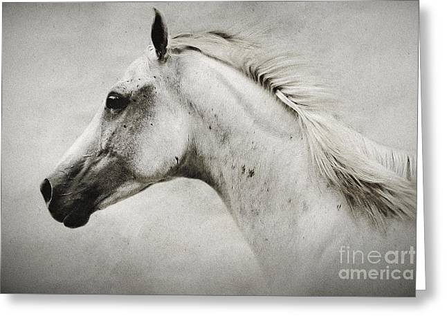 Arabian White Horse Portrait Greeting Card