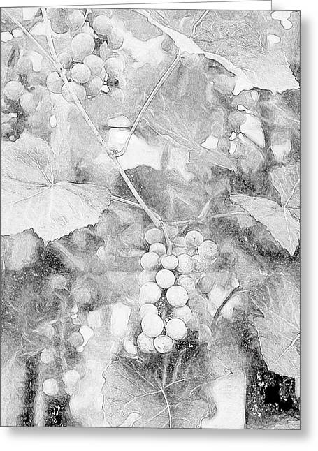Arbor Grapes Sketch Greeting Card