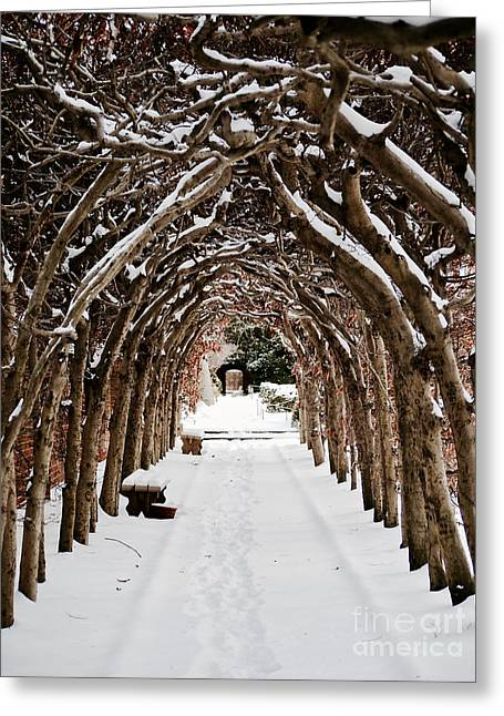 Arbor In The Snow Greeting Card by Rachel Morrison