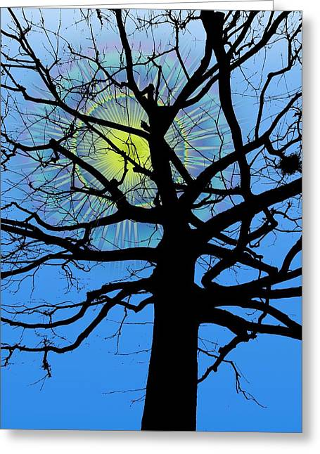 Arboreal Sun Greeting Card by Tim Allen