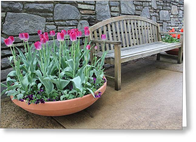 Arboretum Bench  Greeting Card