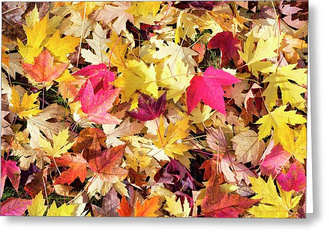 Arboretum Maple Leaves Greeting Card