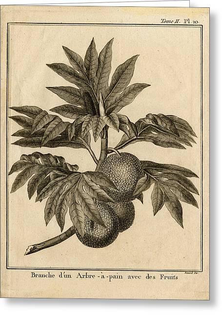 Arbre Apain Breadfruit Branch Greeting Card