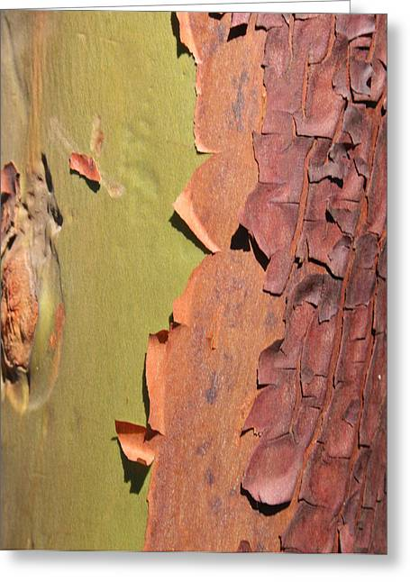 Arbutus Tree Greeting Card by Sherry Leigh Williams