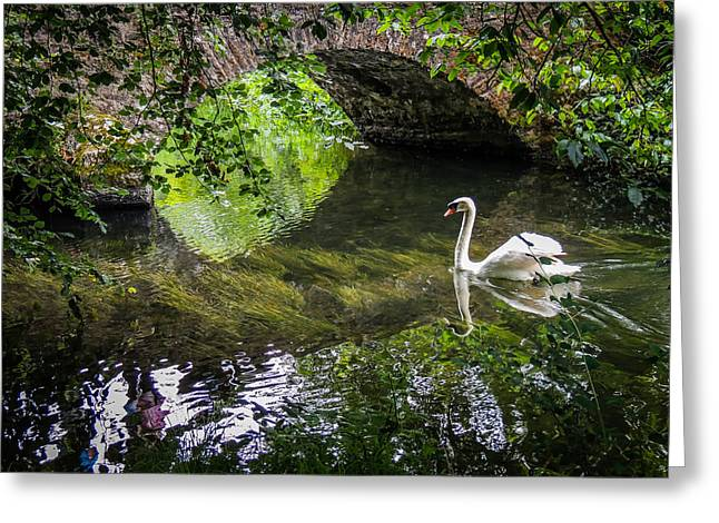 Arched Bridge And Swan At Doneraile Park Greeting Card