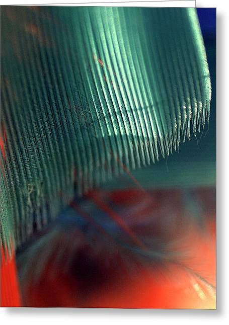 Greeting Card featuring the photograph Architect Of A Feather by Irma BACKELANT GALLERIES