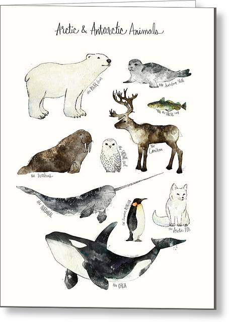 Arctic And Antarctic Animals Greeting Card by Amy Hamilton
