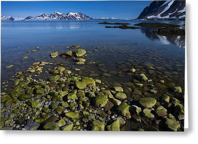 Arctic Canvas Greeting Card by Biswarup Lahiri