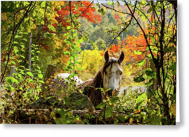 Greeting Card featuring the photograph Are You My Friend? by Jeff Folger