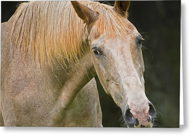 Are You Taking My Picture Greeting Card by Susan Leggett