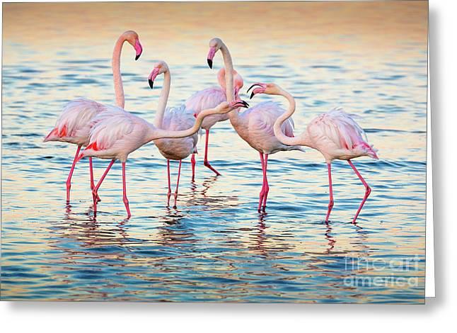 Arguing Flamingos Greeting Card by Inge Johnsson