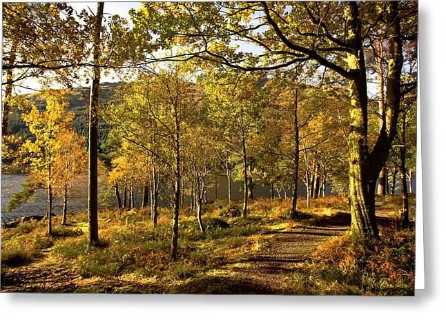 Argyll And Bute, Scotland Path Through Greeting Card by John Short
