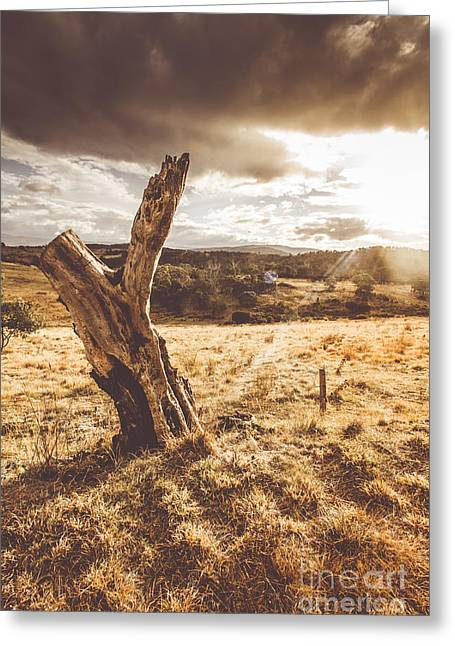 Arid Tasmania Bush Landscape Greeting Card by Jorgo Photography - Wall Art Gallery