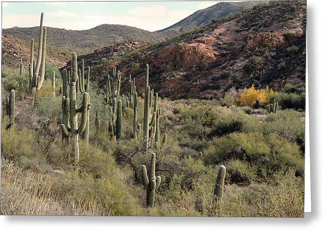 Arizona Badlands  Greeting Card