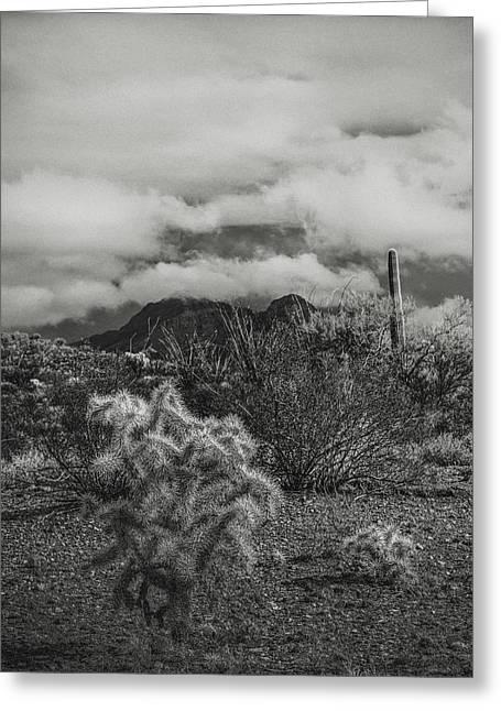 Arizona Desert B-w Greeting Card