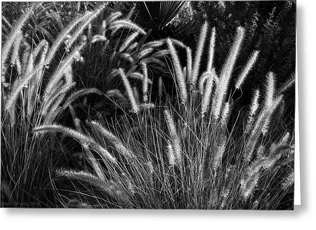 Arizona Desert Grasses Greeting Card