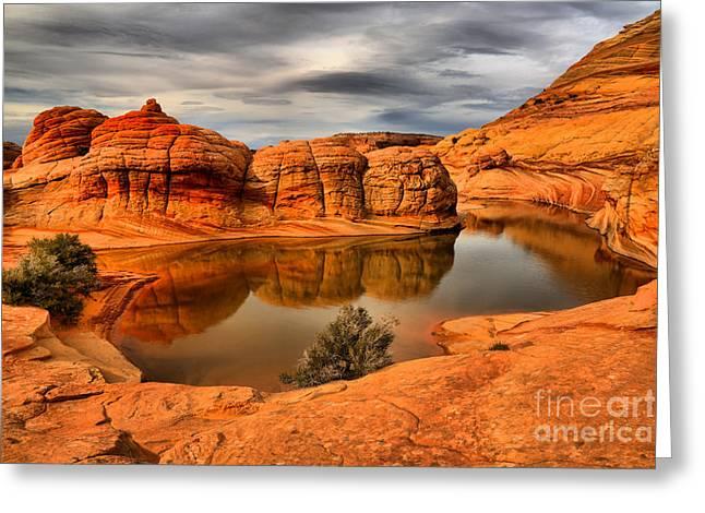 Arizona Desert Life Greeting Card by Adam Jewell
