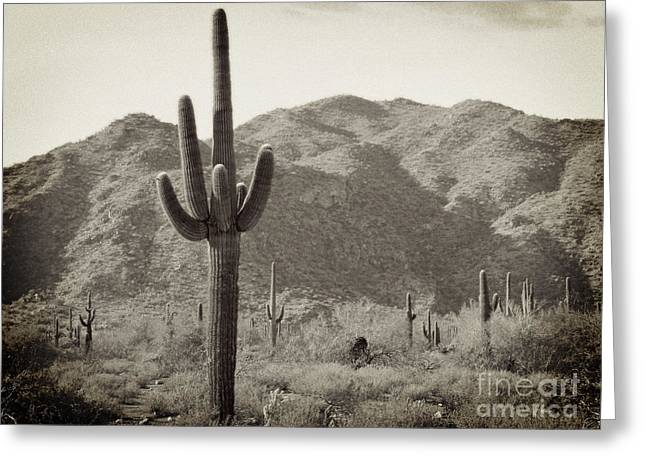 Arizona Desert Greeting Card by Methune Hively