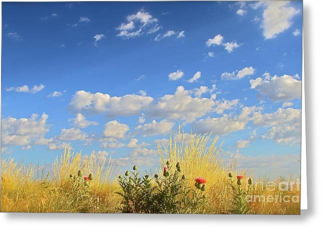 Arizona Sky And Golden Grass Greeting Card by Gus McCrea