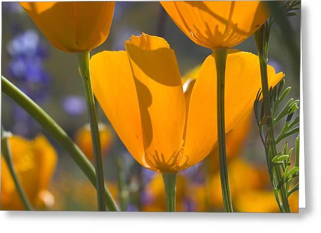 Arizona Spring Color Greeting Card