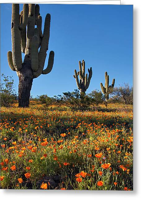Greeting Card featuring the photograph Arizona Spring Flowers And Blossoms With Saguaro Cactus by Dave Dilli