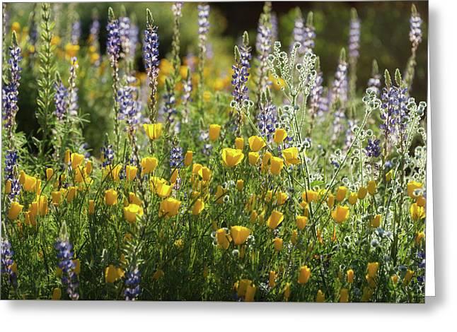 Greeting Card featuring the photograph Arizona Spring Wildflowers  by Saija Lehtonen