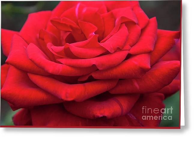 Arizona Territorial Rose Garden - Red Velvet Greeting Card by Kirt Tisdale
