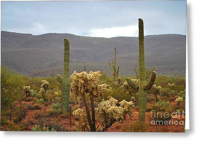 Arizona's Sonoran Desert  Greeting Card