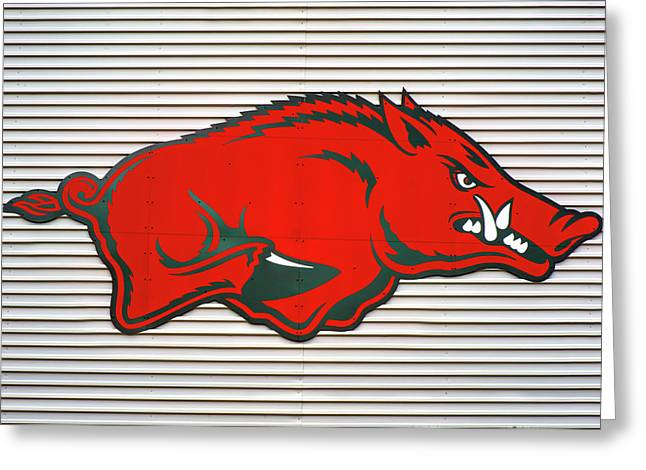 Arkansas Razorback On Metal Greeting Card by Gregory Ballos