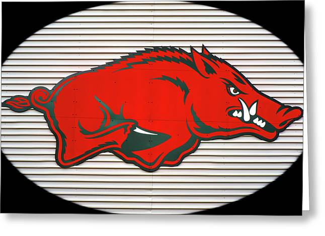 Arkansas Razorback On Metal With Black Border Greeting Card by Gregory Ballos