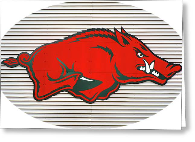 Arkansas Razorback On Metal With White Border Greeting Card by Gregory Ballos