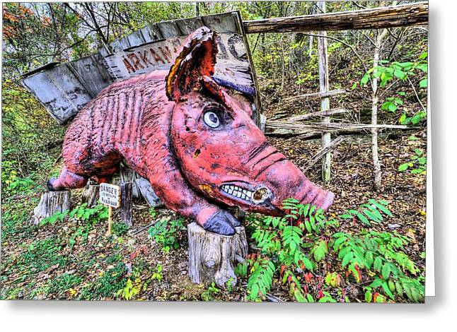 Arkansas Razorbacks Greeting Card by JC Findley
