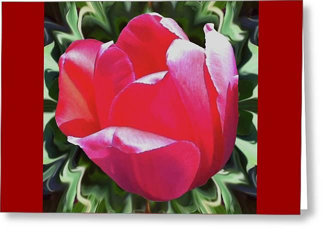 Arlington Tulip Greeting Card