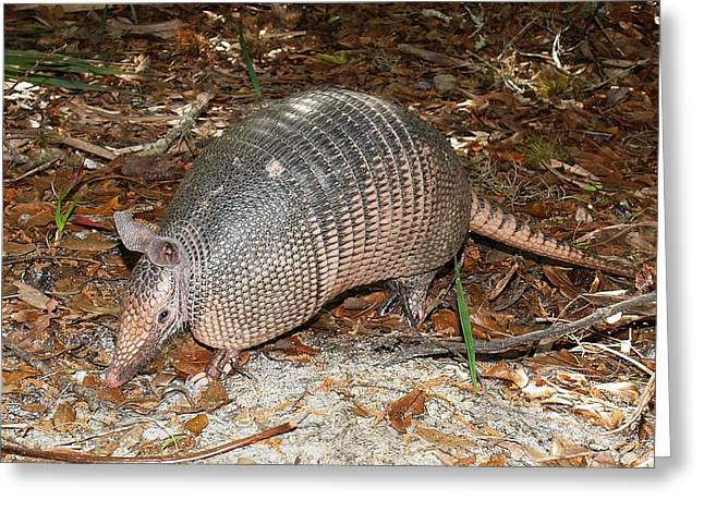 Greeting Card featuring the photograph Armadillo by Phil Stone