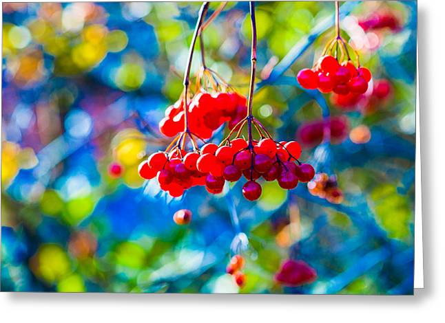 Greeting Card featuring the photograph Arrowwood Berries Abstract by Alexander Senin