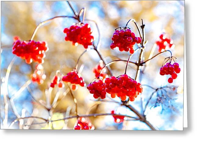 Greeting Card featuring the photograph Arrowwood Berries by Alexander Senin