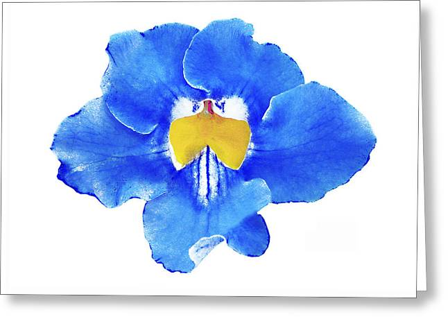 Art Blue Beauty Greeting Card
