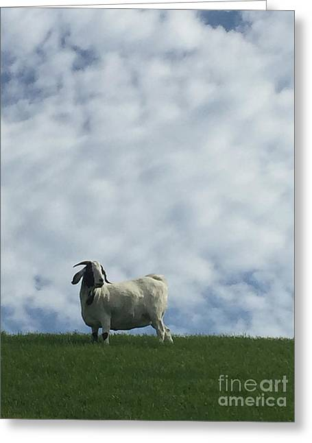 Art Goat Greeting Card
