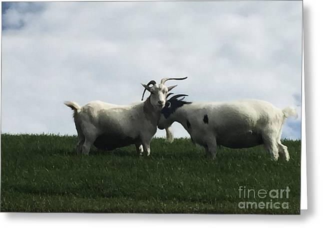 Art Goats I Greeting Card