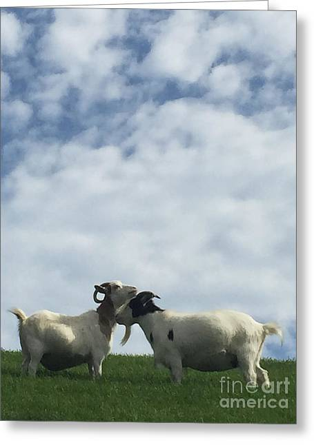 Art Goats II Greeting Card